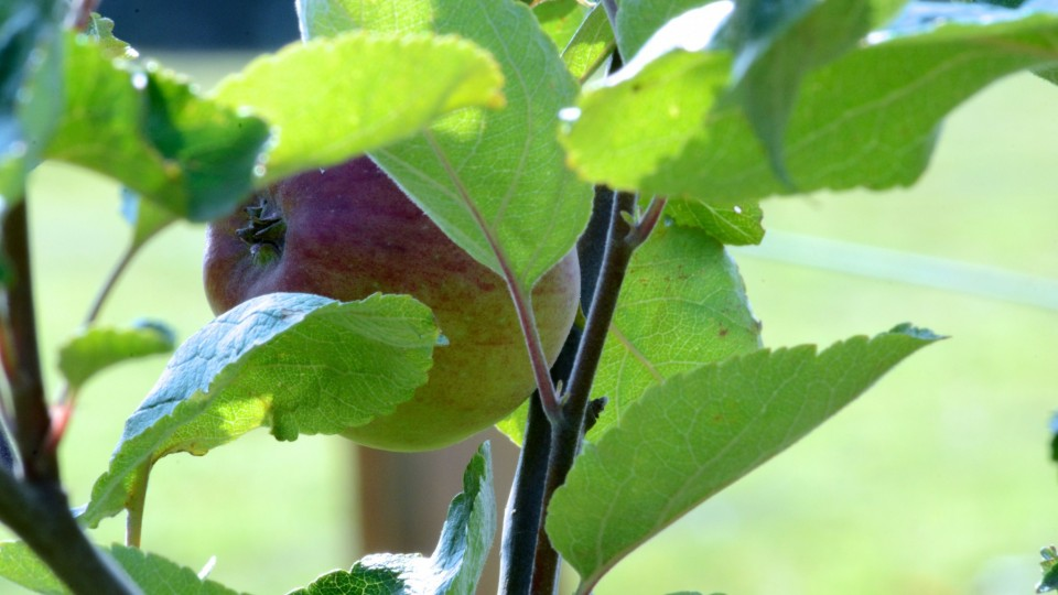 Baslow Community Jubilee Orchard
