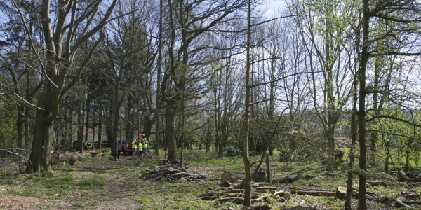 Baslow Woodland Park, Site Clearance Day