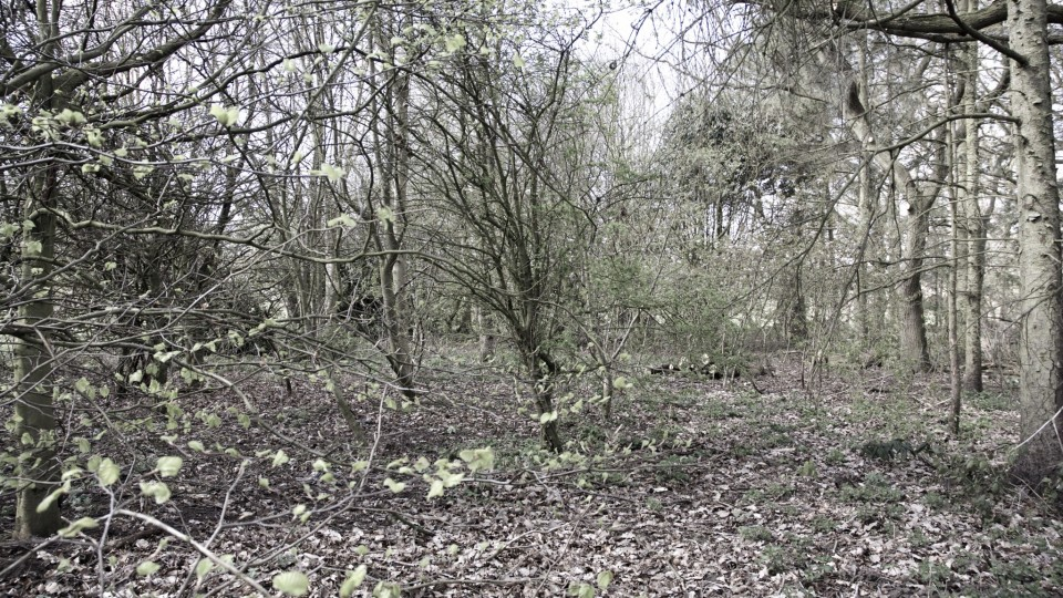 Woodland Park's Planning Application