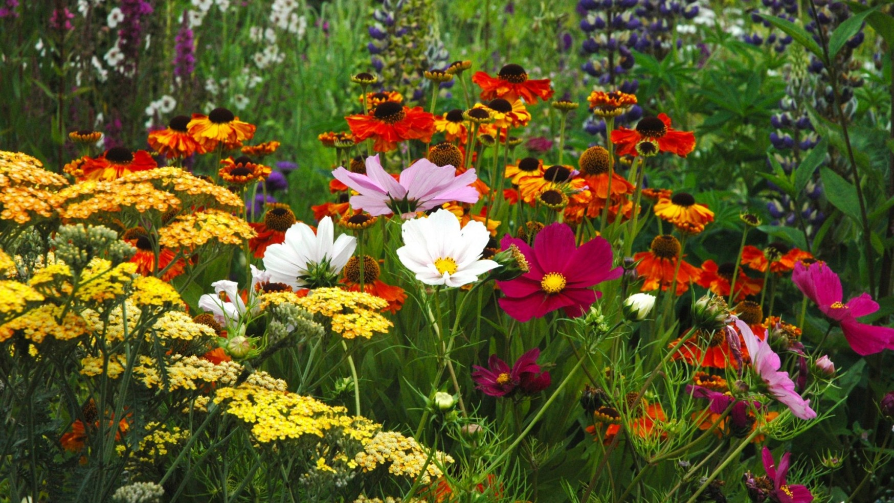 Baslow Garden Society